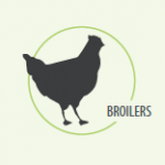 Broilers-liptosa